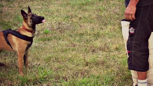 Vos chiens et leurs harnais! Photo  - Page 2 518270557714206936769451491891047724n
