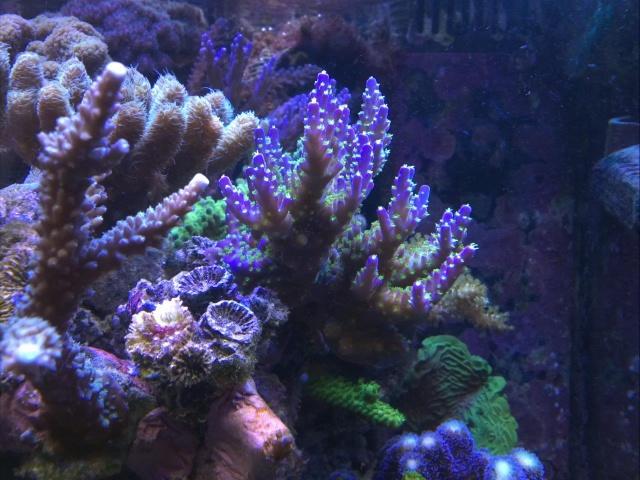 Mes (plus) de 60 plantes dans mon 240 litres - Page 6 528807IMG3295