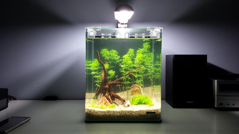 20 litres Naturel / Low tech / Sable et éclairage seulement 529566Jour001