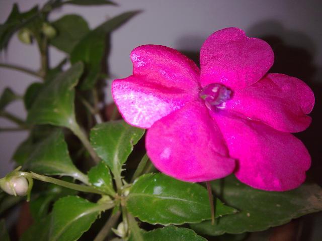 Floraisons de décembre  - Page 2 533933Photo032
