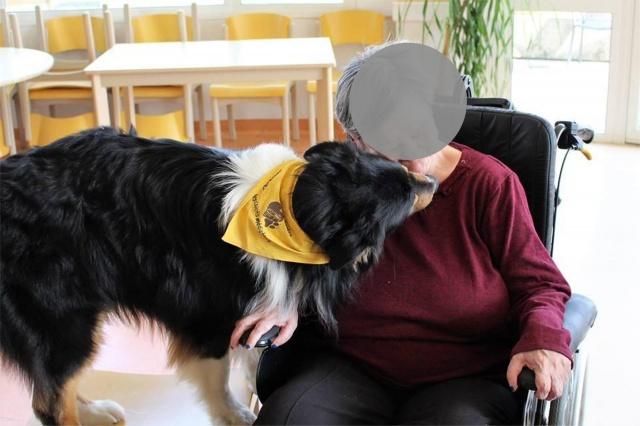 Impact du chien sur la santé humaine - Page 3 550364dustyokok