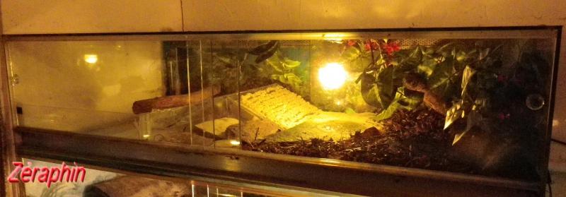 Regroupement des photos d'aquaterrariums espèces palustres 55143604janvier201221