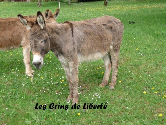(Dept19) LOLA (dcd) et CHARLENE, ânesses, réservées par Indye !!!! (Juin 2013) - Page 6 551697Lola1