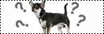 Forum Chihuahua : Mini Dog's Chihuahua 556517questioneleveursjpg