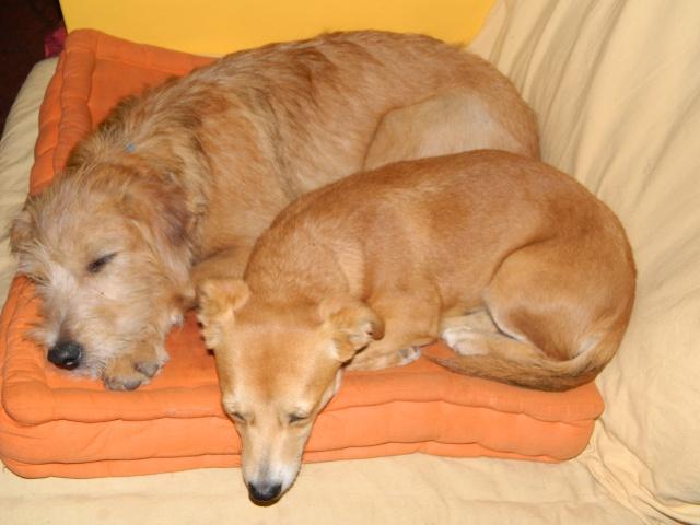 Arika, adorable croisée Pinscher née le 15/07/2012 en FA (89) 558672DSCN1445