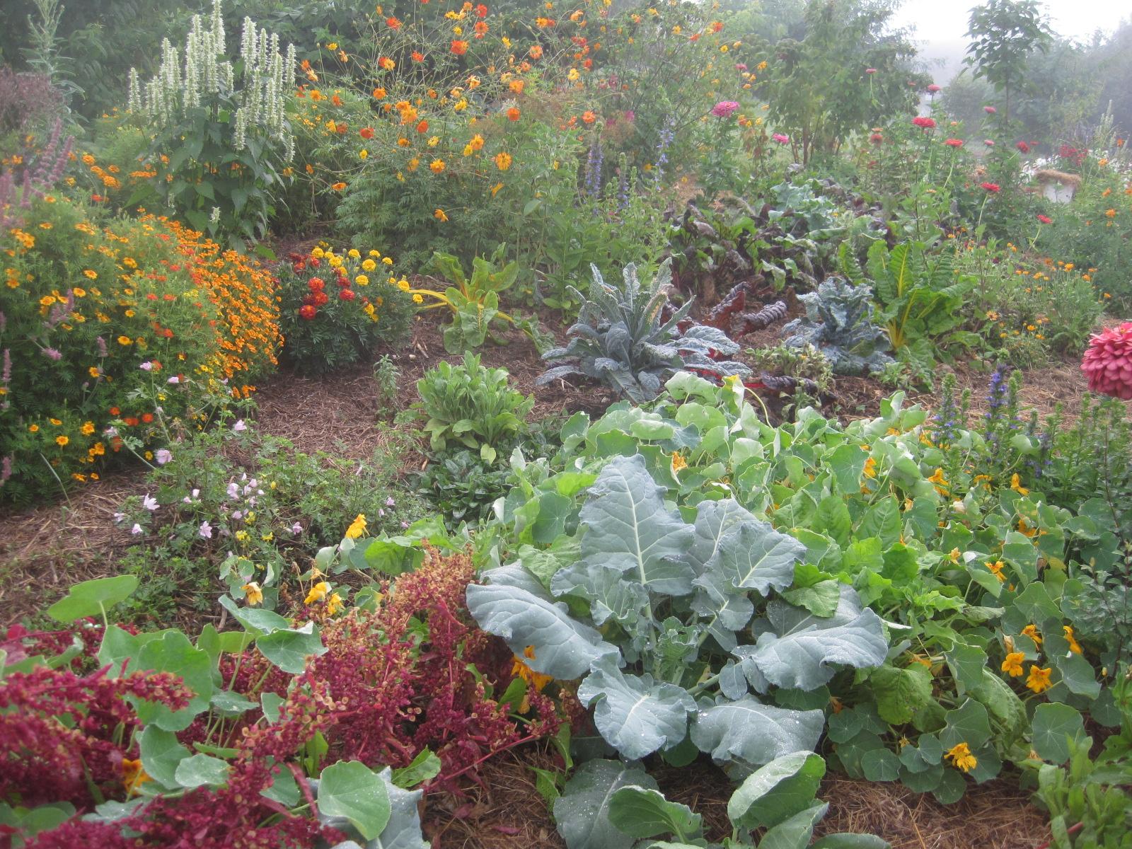 """Images partagées d'espaces jardins """"naturels"""", sans poisons. 564218IMG7141"""