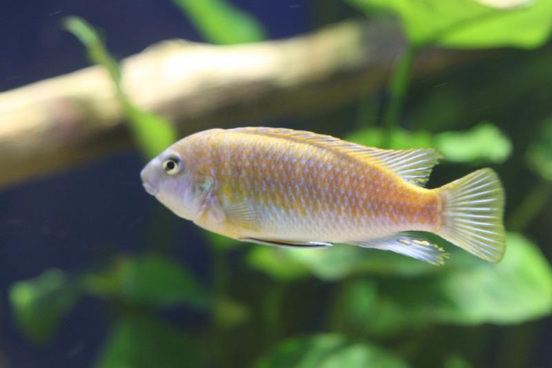 aquarium de 2000L en bois - Page 2 565472IMG0024