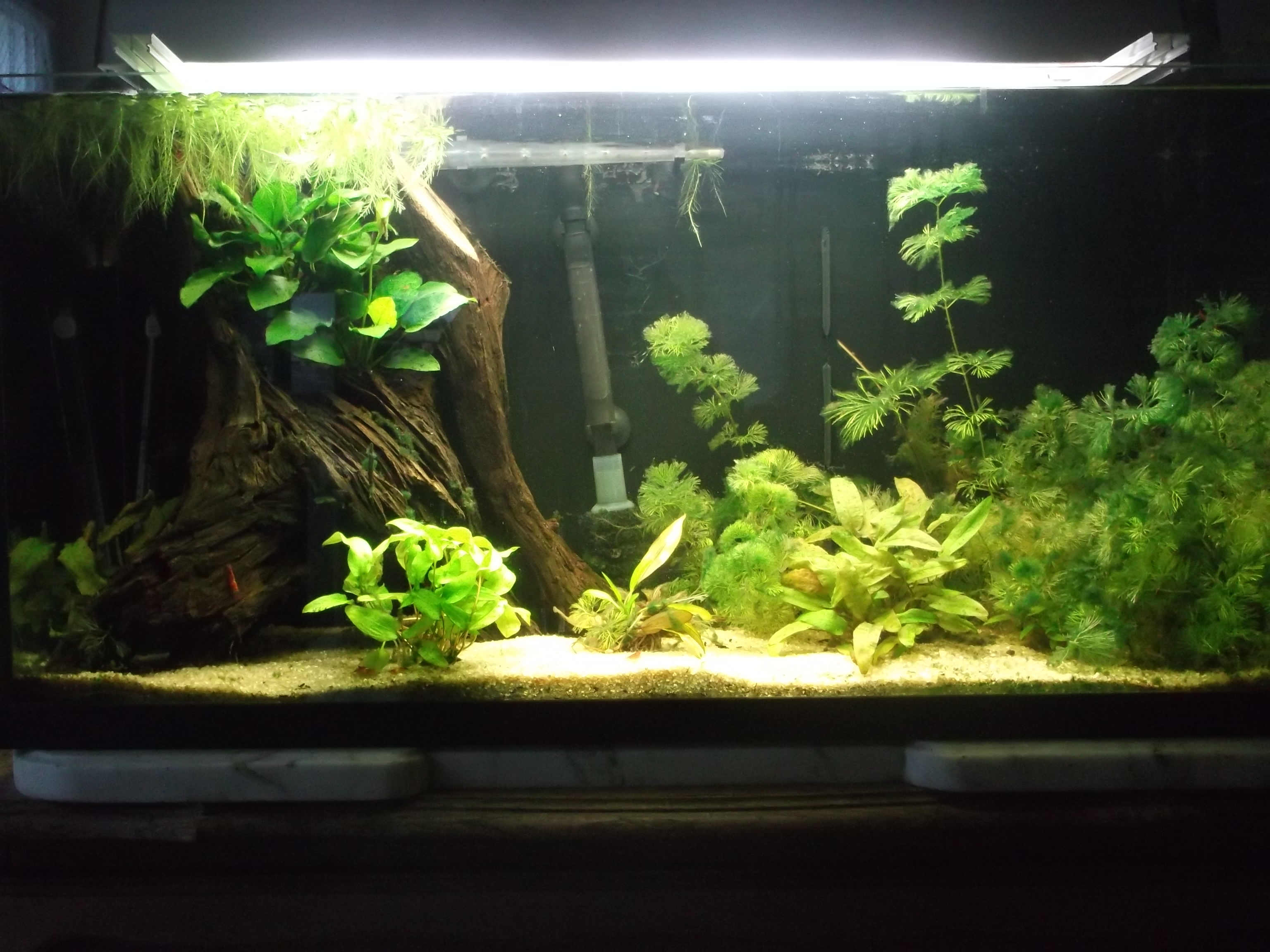 Nouveaux poisson qui ne mange pas ou peux. 566413DSCF5267