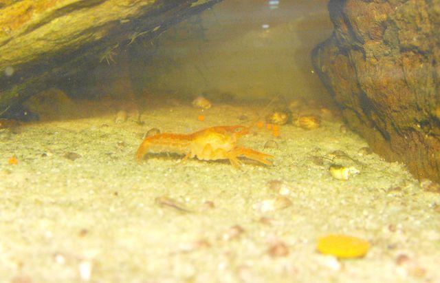 Avez vous des crevettes ou d'autres crustacés? 569275CPO2080111