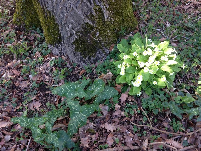 (40) Plantarium et chemin de ronde - Gaujacq 572931IMG0518