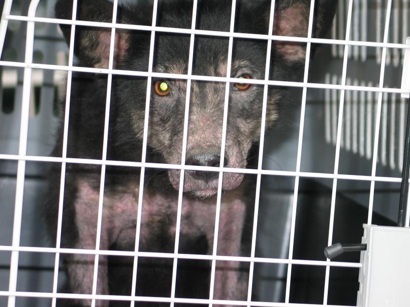 > Mika, un amour de petite chienne, née en mai 2011 - Adoptée 576215473
