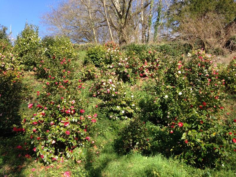 (40) Plantarium et chemin de ronde - Gaujacq 582055IMG0504