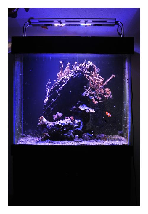 Vends aquarium récifal tout équipé + vivant 583058ROB3948redim