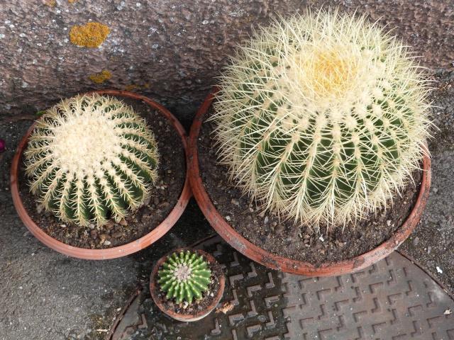cactus - Page 2 591044P1180790