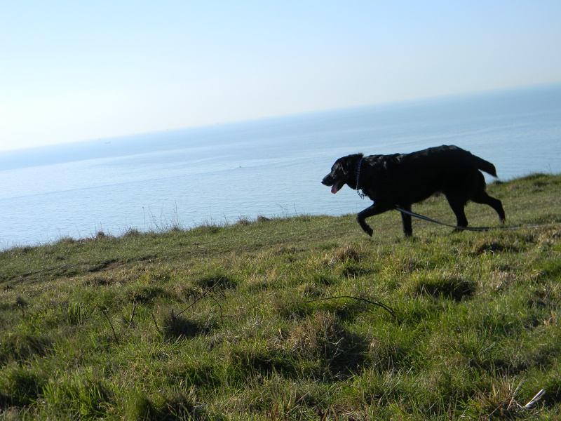 Photo de nos chiens batards! 591104DSCN2938