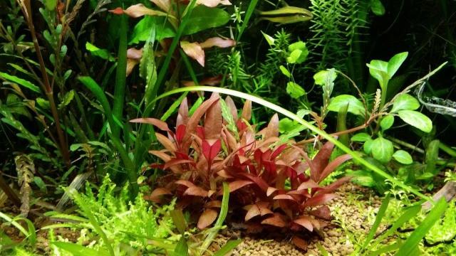Mes (plus) de 60 plantes dans mon 240 litres - Page 5 59264820141125060019