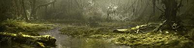 Les Marais de l'Oubli