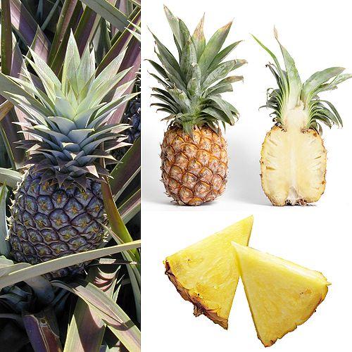Fleurs,....fruit,.....tout ce qui se mange,...se boit....ou qui vient de la nature.......... 595624500pxOwoceAnanasjpg