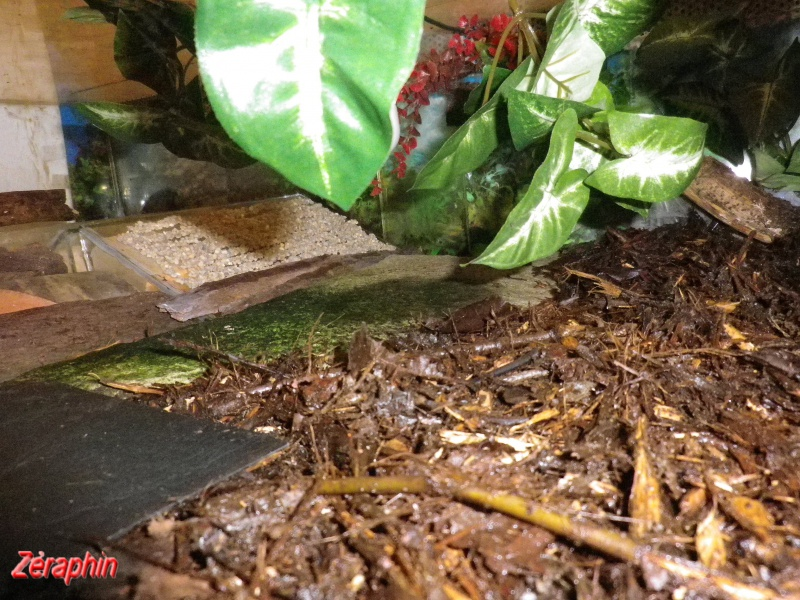 Aménagement d'un aqua-terrarium pour espèce semi-aquatique 59642404janvier201224