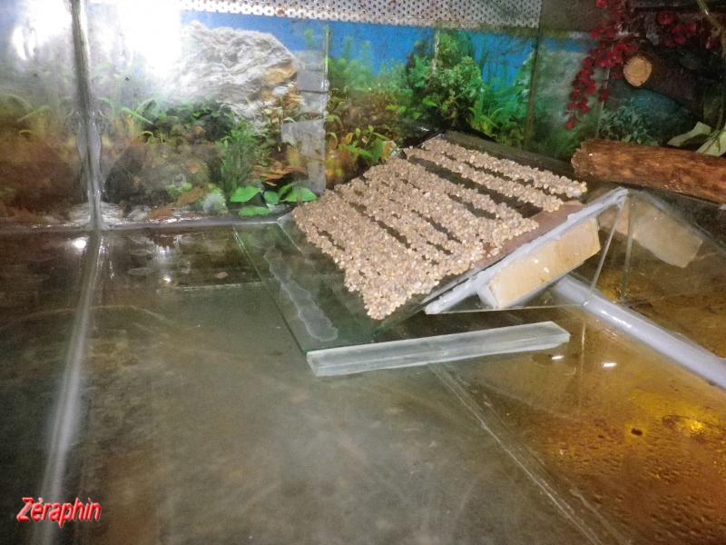 Aménagement d'un aqua-terrarium pour espèce semi-aquatique 60290404janvier201212