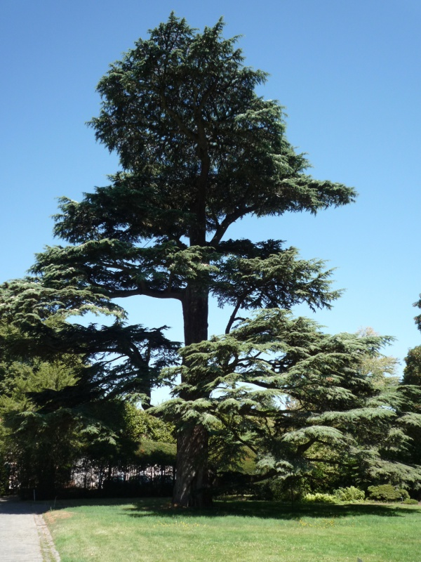 arboretum 603551P1070873