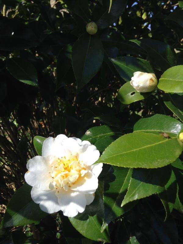 (40) Plantarium et chemin de ronde - Gaujacq 605372IMG0508