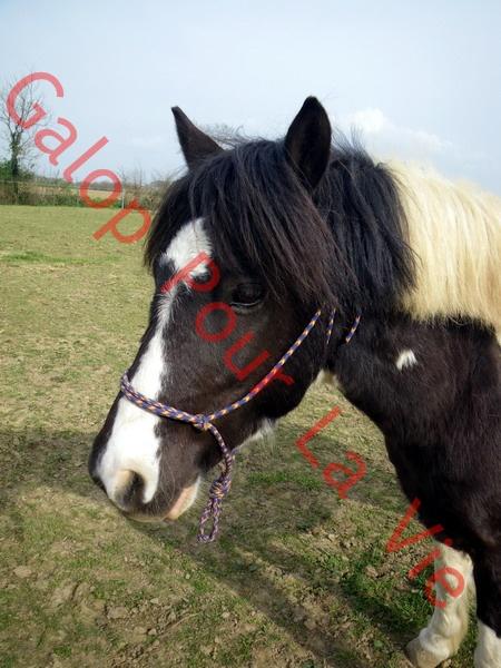 LOONY -  ONC poney né en 2001 - Adopté en juin 2011 par Carole 605947IMGP8165