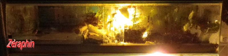 Aménagement d'un aqua-terrarium pour espèce semi-aquatique 61264907janvier201211
