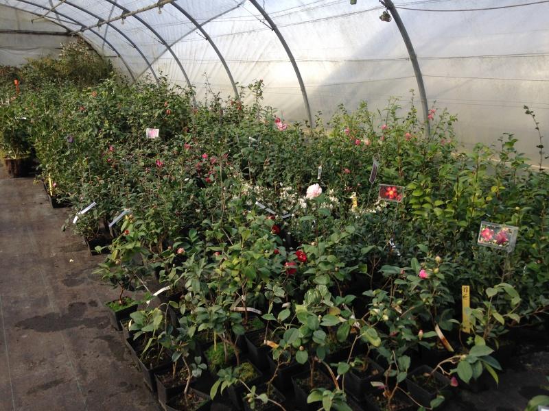 (40) Plantarium et chemin de ronde - Gaujacq 614810IMG0541