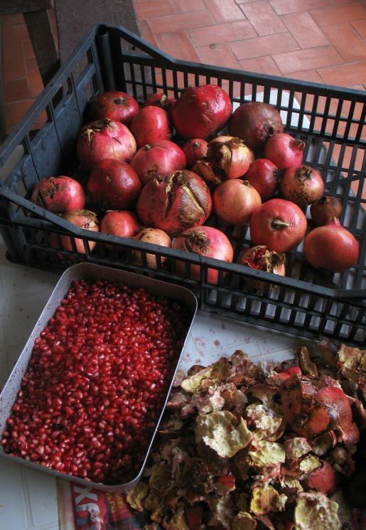 [Nourriture] Subsistance à coût 0, plantes et fruits sauvages - Page 4 615047grenades