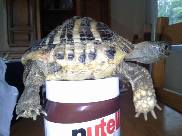 conseils pour aider une tortue-terra  615242Platon3