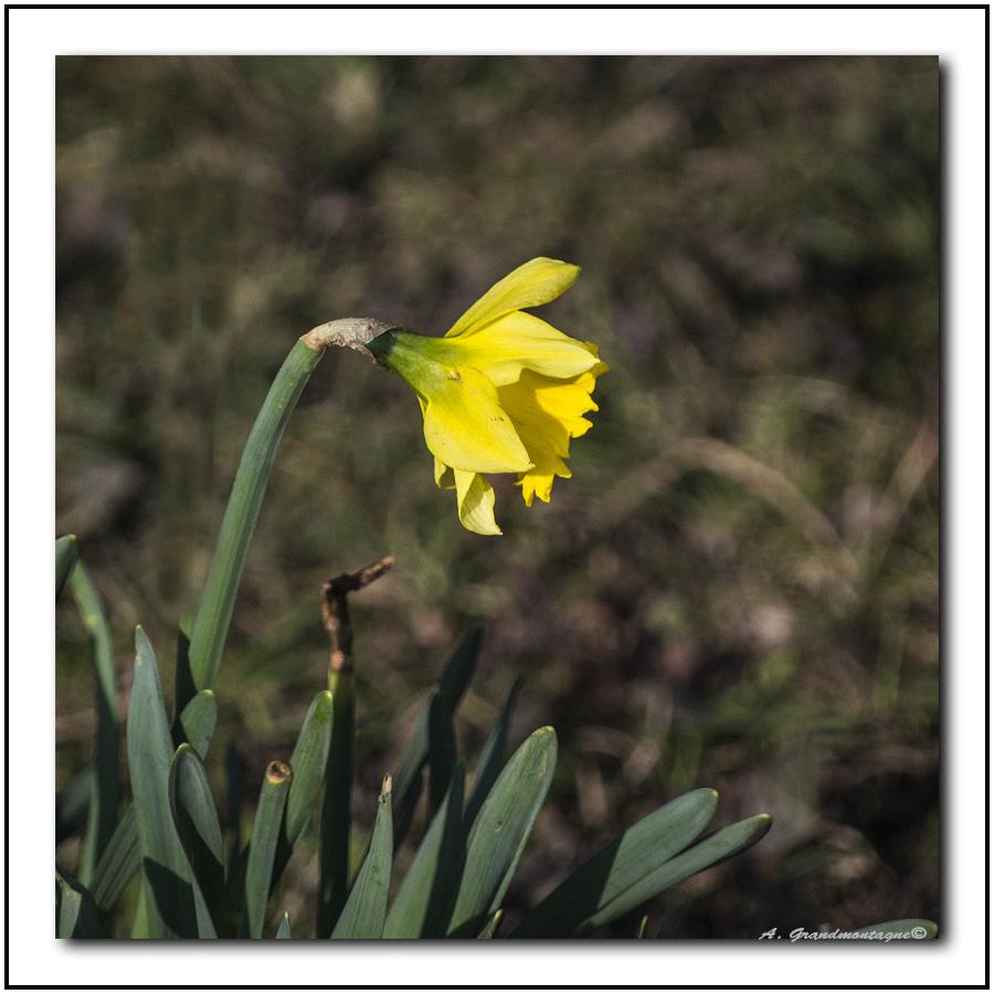 Arrivée du printemps 615878DSC0003
