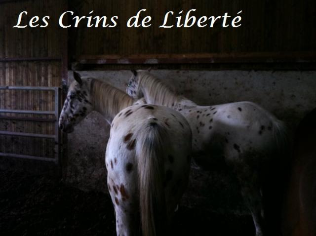 (Dept 15) Libellule (Partie) & Reverie, ONC, Sauvées par nathalie  (2011/2020) - Page 10 616037libelluleetreverie