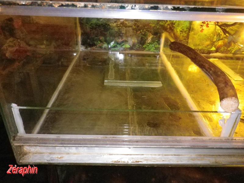 Aménagement d'un aqua-terrarium pour espèce semi-aquatique 61774004janvier20122