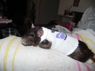 Le rat saucisson - Protéger une plaie après opération - Page 6 621141DSCN5657