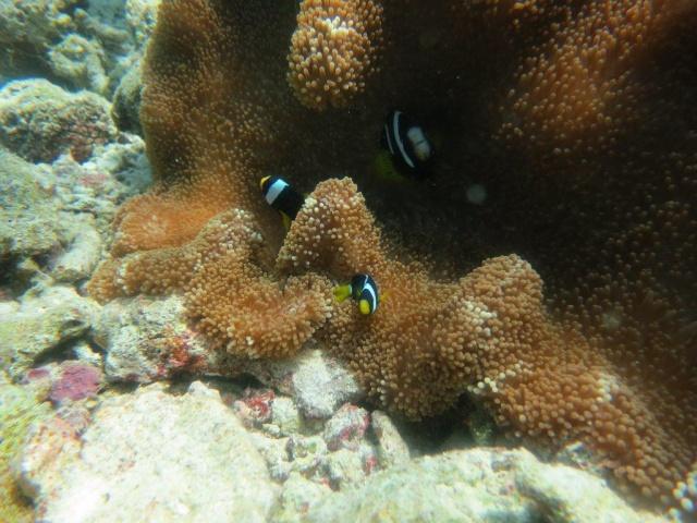 Quelques photos de mes dernières vacances (Maldives) 631434IMG3661