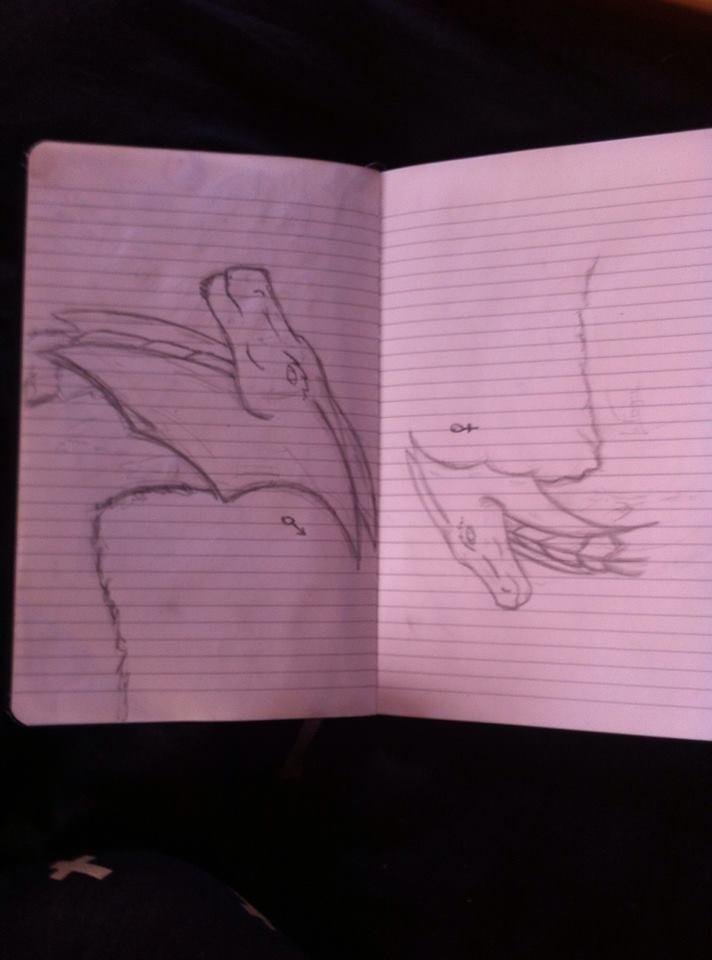 RainForest Dragon, male and female gender 63401616087681020348661158963294907986n