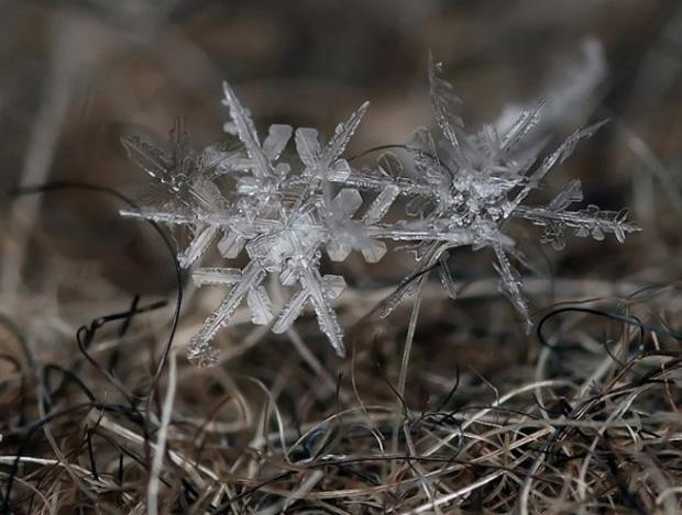 la légende des flocons de neige 636566AndrewOsokinmacrophotographiesfloconsdeneige7