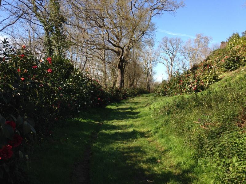 (40) Plantarium et chemin de ronde - Gaujacq 639286IMG0492