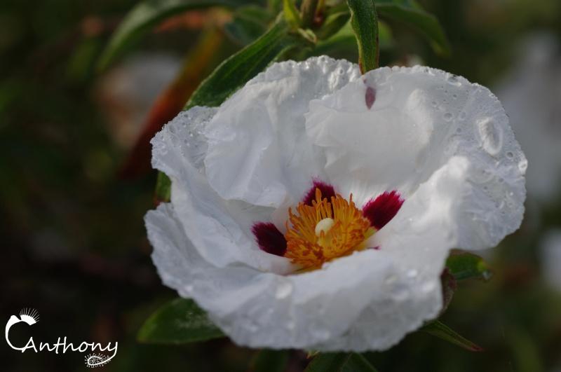 Fleur de graminée 641459IMGP5077