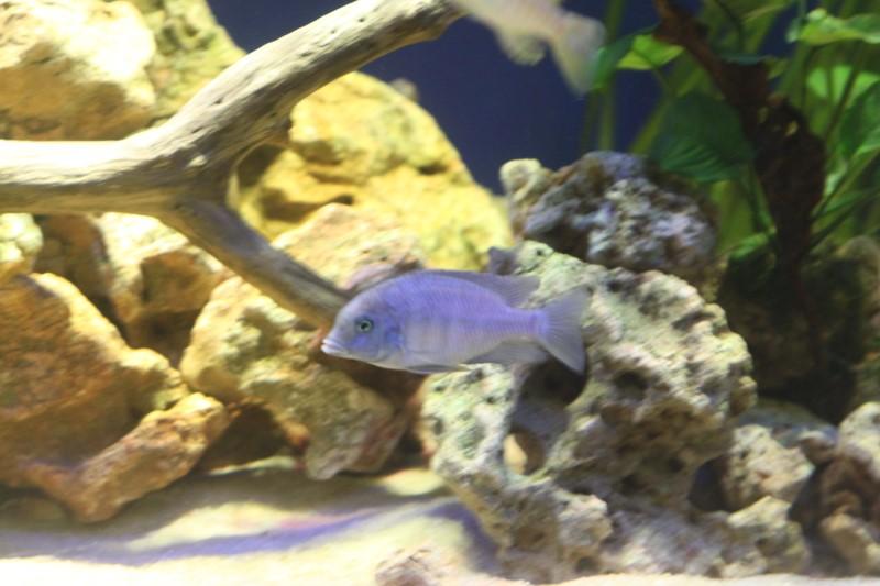 aquarium de 2000L en bois - Page 2 643459IMG0007