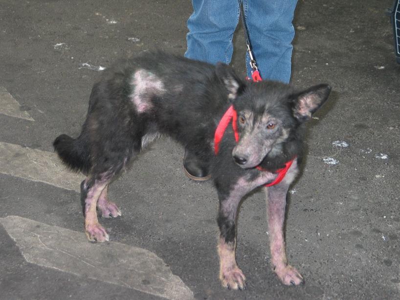 > Mika, un amour de petite chienne, née en mai 2011 - Adoptée 650308299