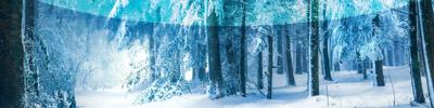 Forêts glacées