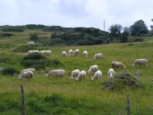 Petit tour dans les Monts d'Aubrac 652451P1080178