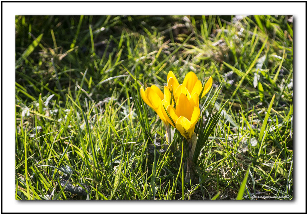 Arrivée du printemps 660129DSC0002