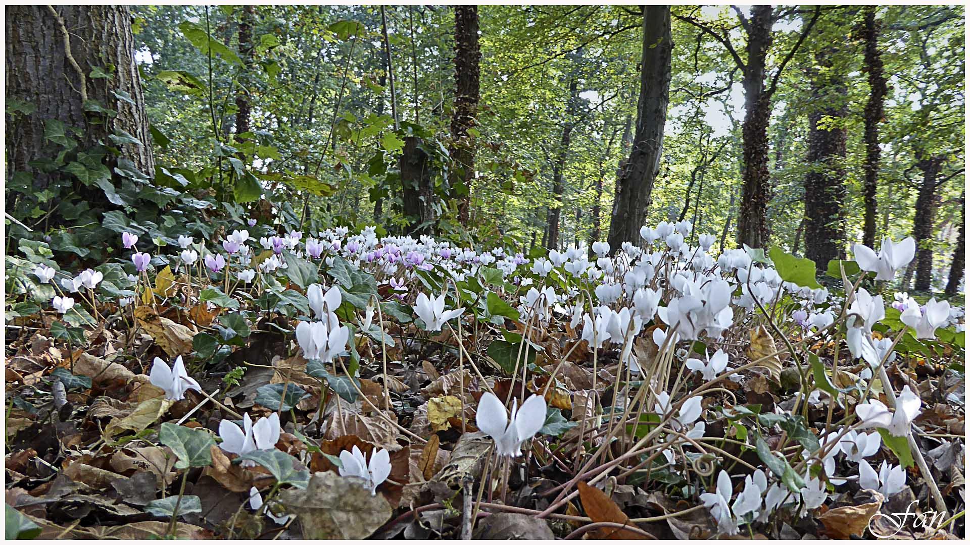Fleurs de mes chemins 662144P1000913bis