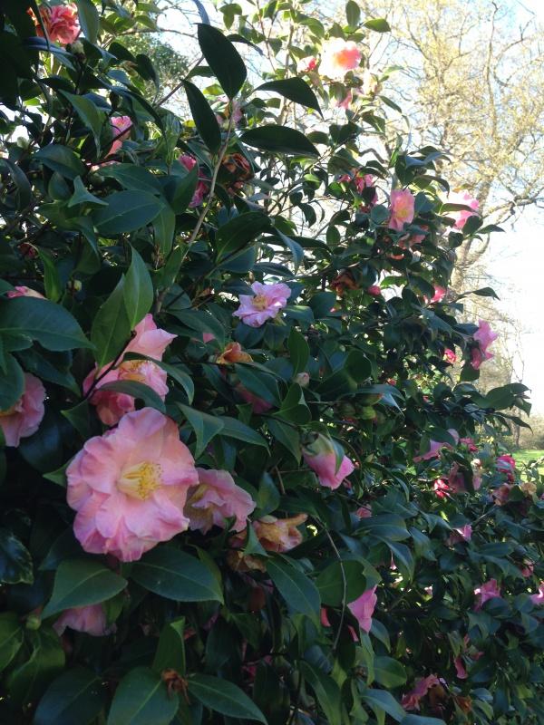 (40) Plantarium et chemin de ronde - Gaujacq 663683IMG0496