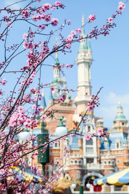 Shanghai Disney Resort en général - le coin des petites infos  - Page 5 675104w405