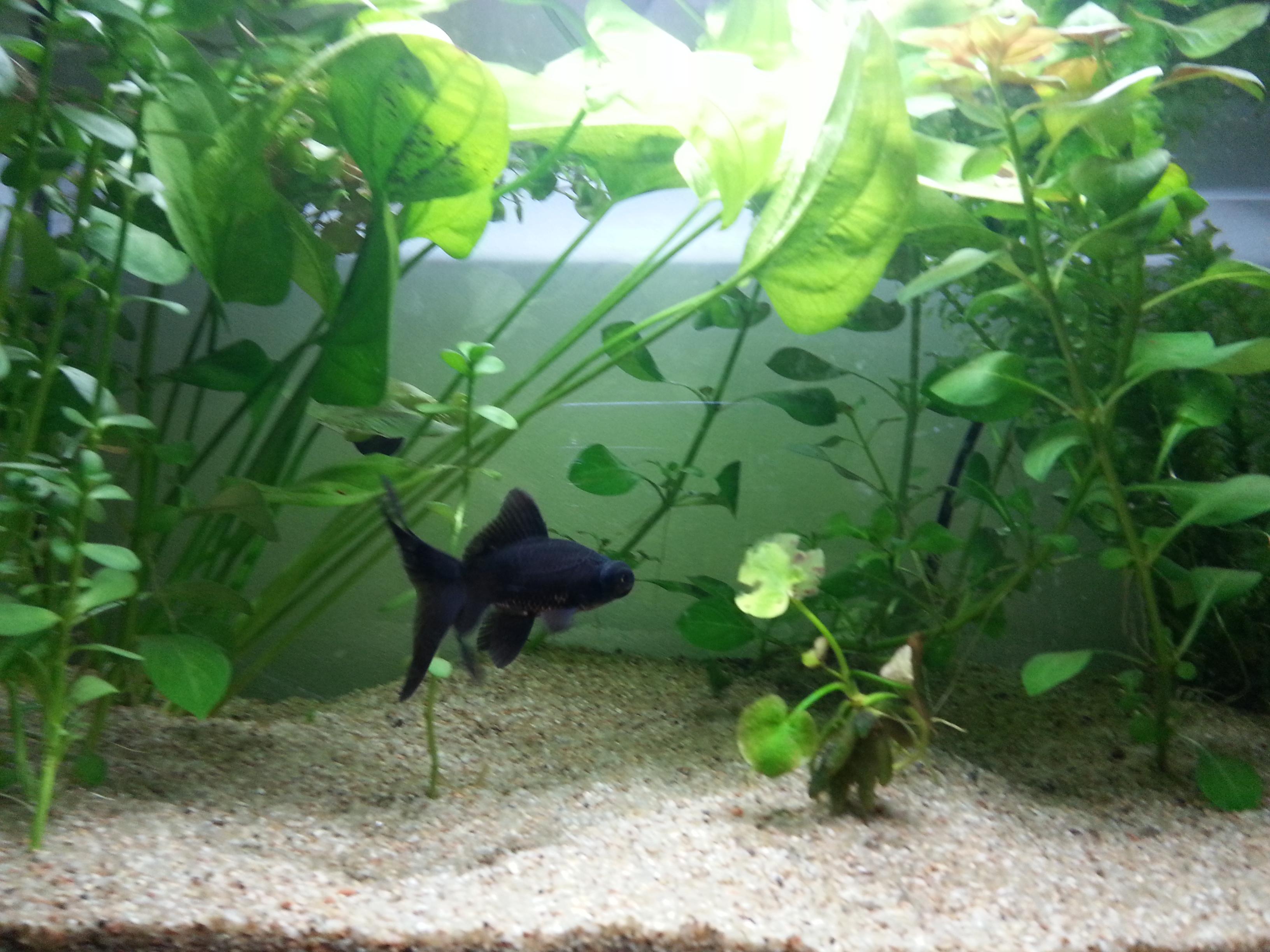 plante dans un aquarium 67914120130624002824