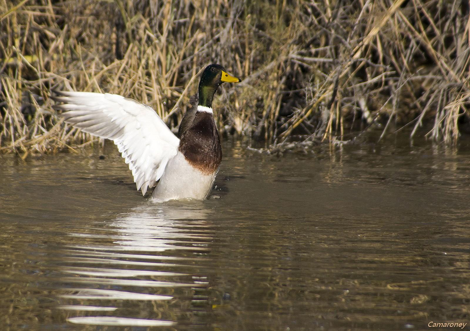Parc ornithologique du pont de Gau  685932DSC53871600